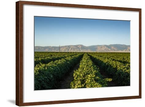 Vineyards in San Joaquin Valley, California, United States of America, North America-Yadid Levy-Framed Art Print