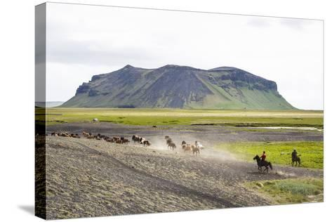 Wild Horses Running, South Iceland, Iceland, Polar Regions-Yadid Levy-Stretched Canvas Print