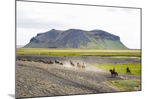 Wild Horses Running, South Iceland, Iceland, Polar Regions-Yadid Levy-Mounted Photographic Print