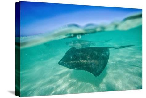 Snap on the Water at Stingray City-Roberto Moiola-Stretched Canvas Print