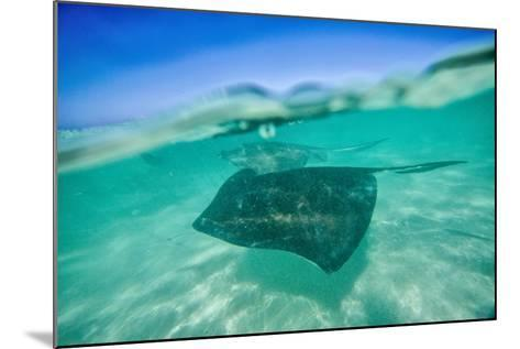 Snap on the Water at Stingray City-Roberto Moiola-Mounted Photographic Print