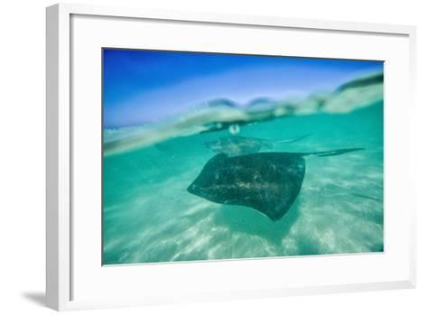 Snap on the Water at Stingray City-Roberto Moiola-Framed Art Print