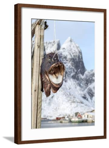 Big Codfish Exposed to Protect the Structures Used for Drying This Product, Lofoten Islands, Norway-Roberto Moiola-Framed Art Print