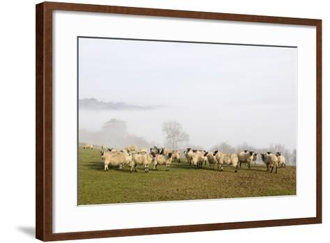 Sheep in Misty Weather on the Mynyd Epynt Moorland, Powys, Wales, United Kingdom-Graham Lawrence-Framed Art Print