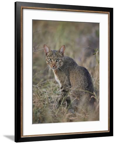 African Wild Cat (Felis Silvestris Lybica), Kruger National Park, South Africa, Africa-James Hager-Framed Art Print