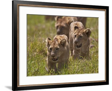 Lion (Panthera Leo) Cubs, Ngorongoro Crater, Tanzania, East Africa, Africa-James Hager-Framed Art Print