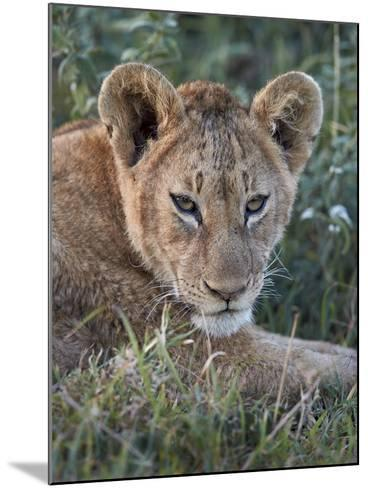 Lion (Panthera Leo) Cub, Ngorongoro Crater, Tanzania, East Africa, Africa-James Hager-Mounted Photographic Print