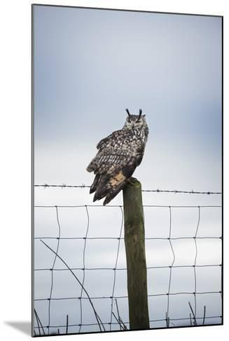 Indian Eagle Owl (Bubo Bengalensis), Herefordshire, England, United Kingdom-Janette Hill-Mounted Photographic Print