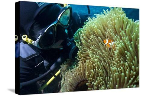 Scuba Diver with False Clown Anenomefish, Magnificent Sea Anemone, Cairns, Queensland, Australia-Louise Murray-Stretched Canvas Print