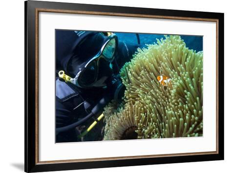 Scuba Diver with False Clown Anenomefish, Magnificent Sea Anemone, Cairns, Queensland, Australia-Louise Murray-Framed Art Print
