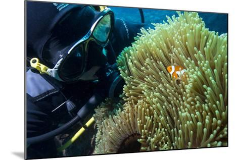 Scuba Diver with False Clown Anenomefish, Magnificent Sea Anemone, Cairns, Queensland, Australia-Louise Murray-Mounted Photographic Print