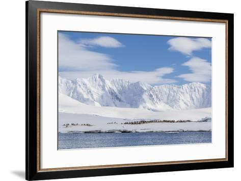 Gentoo Penguin (Pygoscelis Papua) Breeding Colony at Dorian Bay, Antarctica, Polar Regions-Michael Nolan-Framed Art Print