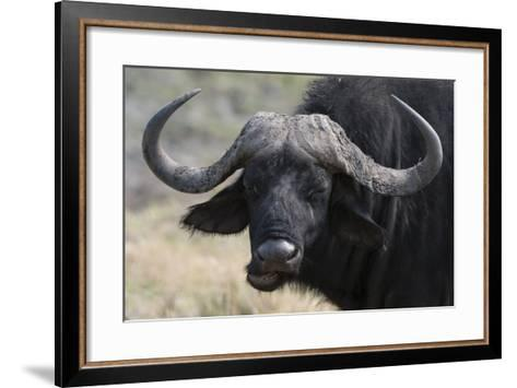 Buffalo (Syncerus Caffer), Chobe National Park, Botswana, Africa-Sergio Pitamitz-Framed Art Print