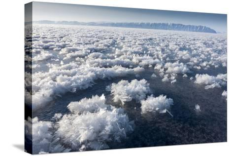 Frost Flowers Formed on Thin Sea Ice When the Atmosphere Is Much Colder Than the Underlying Ice-Louise Murray-Stretched Canvas Print