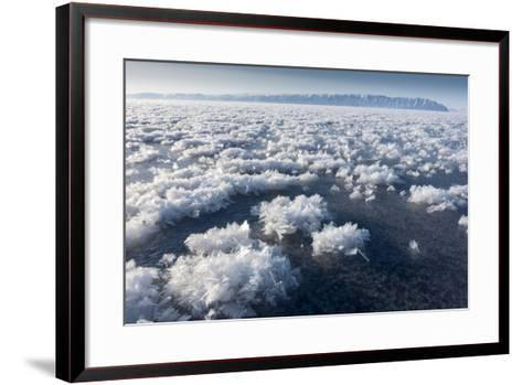 Frost Flowers Formed on Thin Sea Ice When the Atmosphere Is Much Colder Than the Underlying Ice-Louise Murray-Framed Art Print