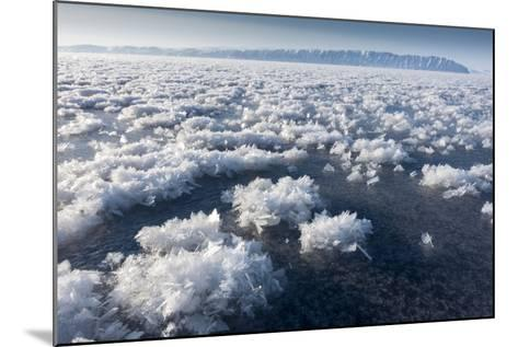 Frost Flowers Formed on Thin Sea Ice When the Atmosphere Is Much Colder Than the Underlying Ice-Louise Murray-Mounted Photographic Print