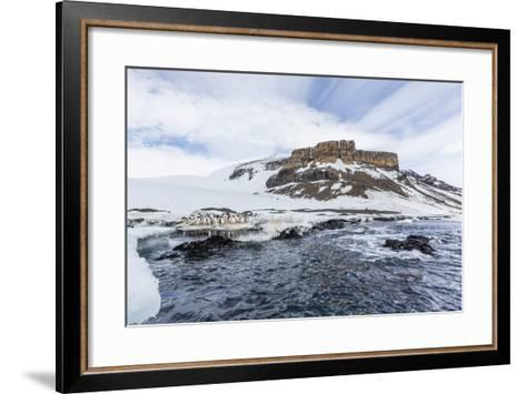 Adelie Penguins (Pygoscelis Adeliae) at Breeding Colony at Brown Bluff, Antarctica, Southern Ocean-Michael Nolan-Framed Art Print