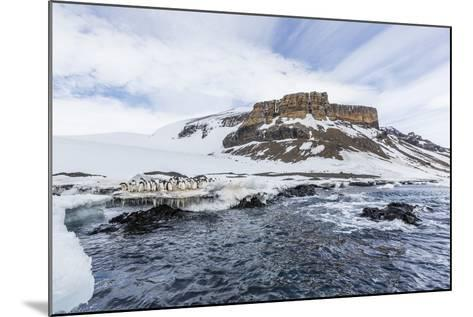 Adelie Penguins (Pygoscelis Adeliae) at Breeding Colony at Brown Bluff, Antarctica, Southern Ocean-Michael Nolan-Mounted Photographic Print