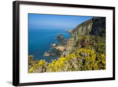 Blooming Gorse over the East Coast of Sark, Channel Islands, United Kingdom-Michael Runkel-Framed Art Print