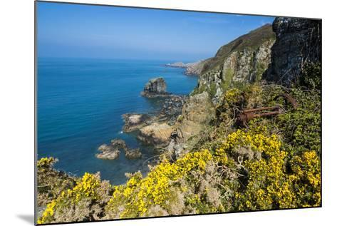 Blooming Gorse over the East Coast of Sark, Channel Islands, United Kingdom-Michael Runkel-Mounted Photographic Print