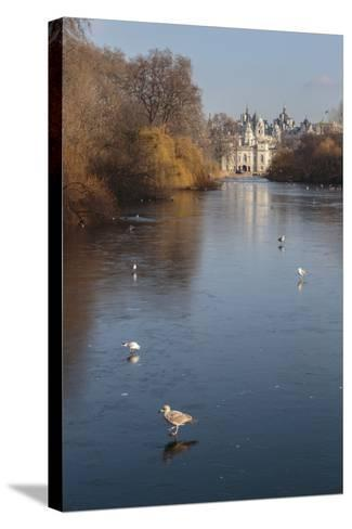 Sea Birds (Gulls) on Ice Covered Frozen Lake with Westminster Backdrop in Winter-Eleanor Scriven-Stretched Canvas Print