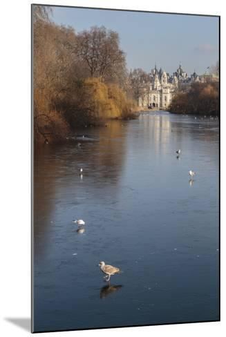 Sea Birds (Gulls) on Ice Covered Frozen Lake with Westminster Backdrop in Winter-Eleanor Scriven-Mounted Photographic Print