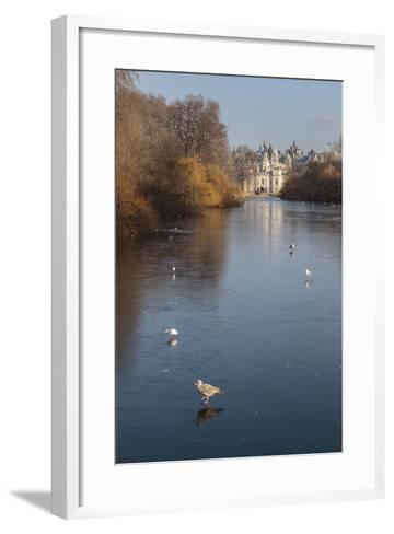 Sea Birds (Gulls) on Ice Covered Frozen Lake with Westminster Backdrop in Winter-Eleanor Scriven-Framed Art Print