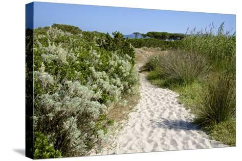 Sandy Path to the Beach, Scrub Plants and Pine Trees in the Background, Costa Degli Oleandri-Guy Thouvenin-Stretched Canvas Print