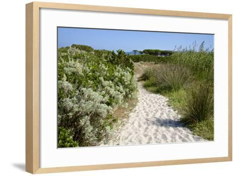 Sandy Path to the Beach, Scrub Plants and Pine Trees in the Background, Costa Degli Oleandri-Guy Thouvenin-Framed Art Print
