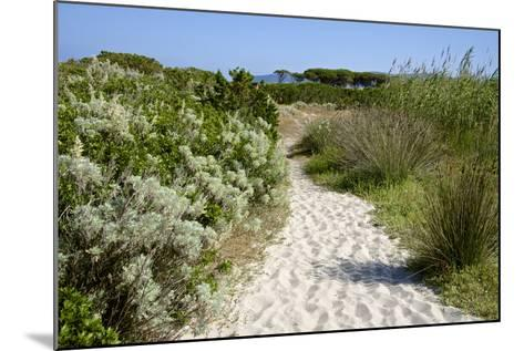 Sandy Path to the Beach, Scrub Plants and Pine Trees in the Background, Costa Degli Oleandri-Guy Thouvenin-Mounted Photographic Print