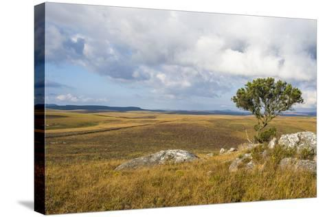 Overlook over the Highlands of the Nyika National Park, Malawi, Africa-Michael Runkel-Stretched Canvas Print