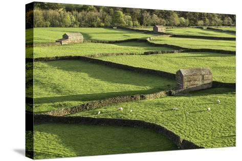 Barns and Dry Stone Walls at Gunnerside-John Woodworth-Stretched Canvas Print