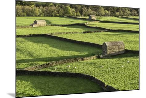 Barns and Dry Stone Walls at Gunnerside-John Woodworth-Mounted Photographic Print