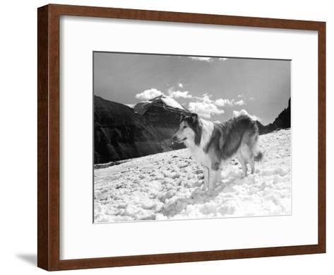 Serie Televisee Lassie 1954-74--Framed Art Print