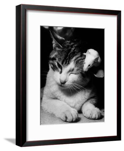 Cat and Mouse 1958--Framed Art Print