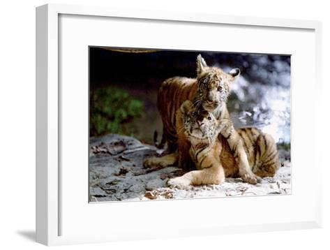 Deux Freres Two Brothers De Jeanjacquesannaud Avec Les Petits Tigres Kumal, Sangha, 2004--Framed Art Print