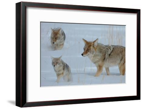 Coyote and Cubs-Lantern Press-Framed Art Print