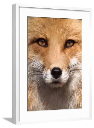 Fox Face-Lantern Press-Framed Art Print