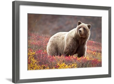 Grizzly Bear and Flowers-Lantern Press-Framed Art Print