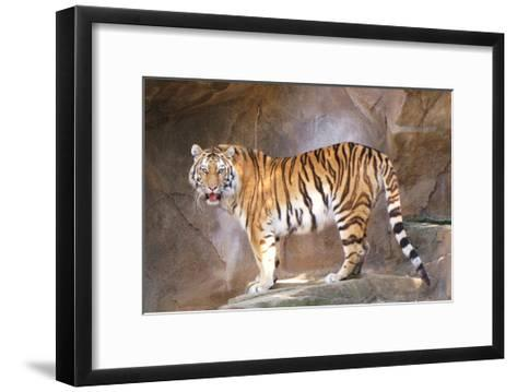 Tiger on Ledge-Lantern Press-Framed Art Print
