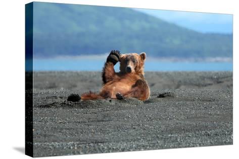 Grizzly Bear Waving-Lantern Press-Stretched Canvas Print