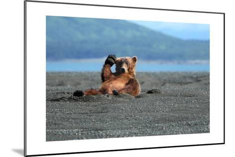 Grizzly Bear Waving-Lantern Press-Mounted Art Print