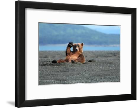 Grizzly Bear Waving-Lantern Press-Framed Art Print