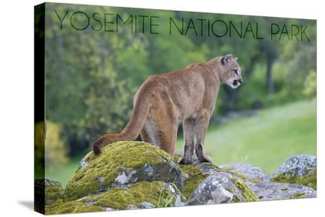 Yosemite National Park, California - Mountain Lion-Lantern Press-Stretched Canvas Print
