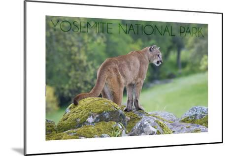 Yosemite National Park, California - Mountain Lion-Lantern Press-Mounted Art Print