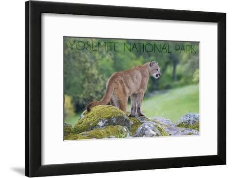 Yosemite National Park, California - Mountain Lion-Lantern Press-Framed Art Print