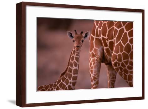 Giraffe and Calf-Lantern Press-Framed Art Print