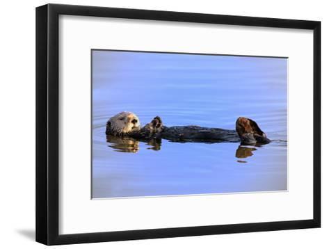 Sea Otter Relaxing-Lantern Press-Framed Art Print