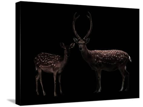 Deer, Dear--Stretched Canvas Print