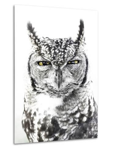 Spotted Eagle Owl, Kgalagadi Transfrontier Park, South Africa-James Hager-Metal Print